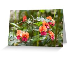 Heart-leaf Flame Pea Mt Frankland Greeting Card