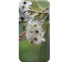Eucalyptus Bush Flowers iPhone Case/Skin