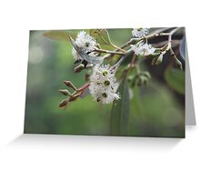 Eucalyptus Bush Flowers Greeting Card
