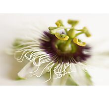 Passionflower Photographic Print