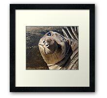 Northern  Elephant Seal pup Framed Print