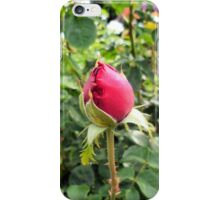 Photography: Nature: A red rose in a garden in Vienna, Austria. iPhone Case/Skin