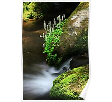 Foamflowers Poster