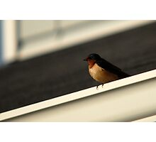 Barn Swallow - Triangles Photographic Print