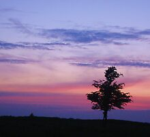 Tree caught in a sunset by Monjii