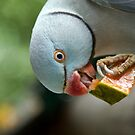 Indian Blue Ringneck by Mary Broome