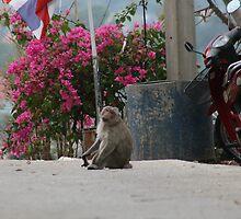 monkey in thailand by weesha