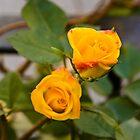 A rose for you by dominiquelandau