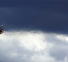 F1-11 Vapour Trail by Darren Post