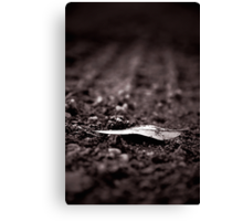 Of Earth Canvas Print