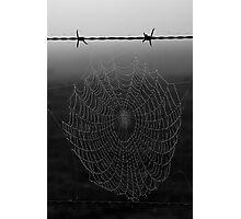 Wet Web Photographic Print