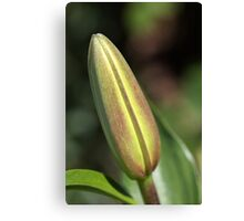 She Buds Then Flowers - Lily Bud Canvas Print