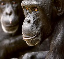 Old men at the Zoo... by Chris Tolmie