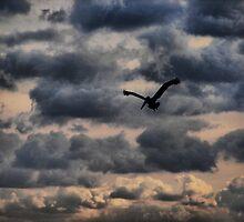 Flying Monkey by Jamie Lee