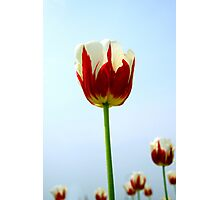 blooming marvellous Photographic Print