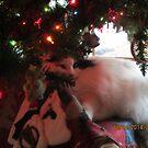 Christmas Tree Kitty by AuntieBarbie
