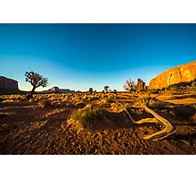 Monument Valley branch Photographic Print