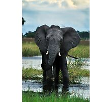 Elephant bull drinking Photographic Print