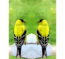 TWO FOR ONE BIRDS Photographic Print