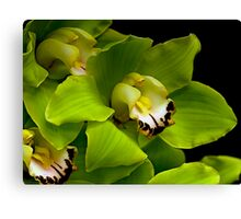Green Orchid Macro Canvas Print
