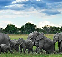 Elephant mud bath by Bakbal