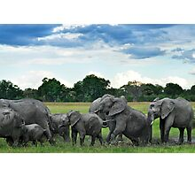Elephant mud bath Photographic Print