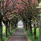 Blossom by AndrewBlackie