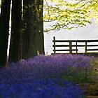 Morning Bluebells by Mark Thompson