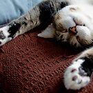 Lazy Cat by dozzie
