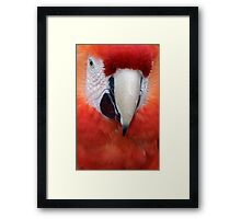 Scarlet Macaw Parrot, Ara macao Framed Print