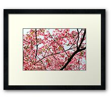 Branched in Pink... Framed Print
