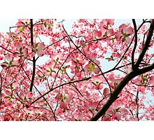 Branched in Pink... Photographic Print