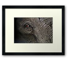 Eye of an African elephant Framed Print