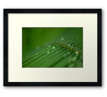 """SURVIVAL"" of a raindrop Framed Print"