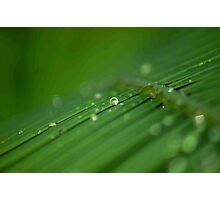 """SURVIVAL"" of a raindrop Photographic Print"