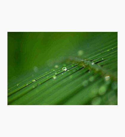 """""""SURVIVAL"""" of a raindrop Photographic Print"""