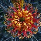 Banksia by Floralynne