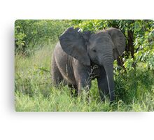 Curious Youngster Canvas Print