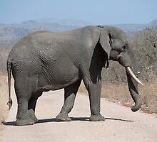 Elephant crossing by Vickie Burt