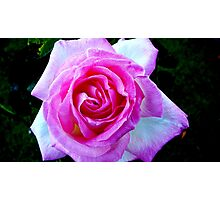 PINK FOR THE LADIES Photographic Print