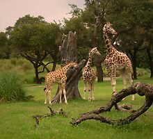 Giraffes by Celeste Thinks