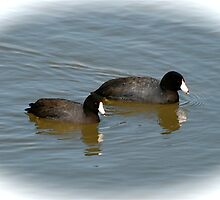 Duck effect by Jim Caldwell