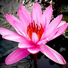 Single lily flower by demistified