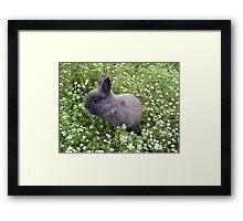 Bunny in Sweet Heaven Framed Print