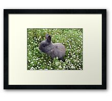 Bunny in Sweet Heaven Framed Print