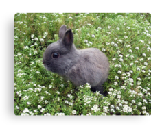 Bunny in Sweet Heaven Canvas Print