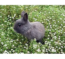 Bunny in Sweet Heaven Photographic Print
