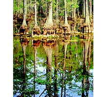 Watery Roots With Reflections Photographic Print