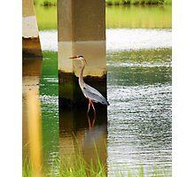 Heron Under The bridge Photographic Print