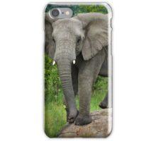 Posing I am (Elephant - loxodonta africana) iPhone Case/Skin